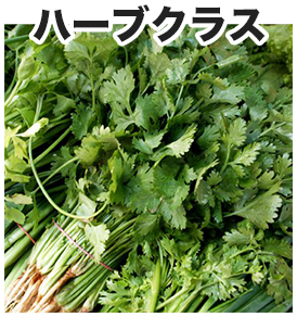 thai-select-herb