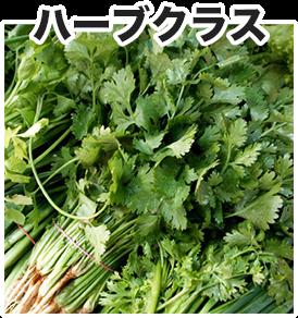 vietnam-select-herb